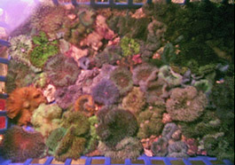 Assorted Colored Mushroom