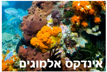 אינדקס אלמוגים