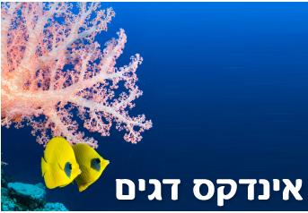 אינדקס דגים